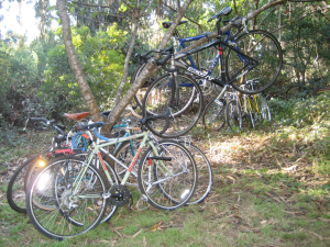 Bikes in a tree