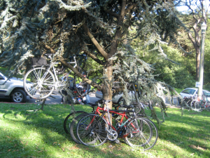 More bikes in a Tree